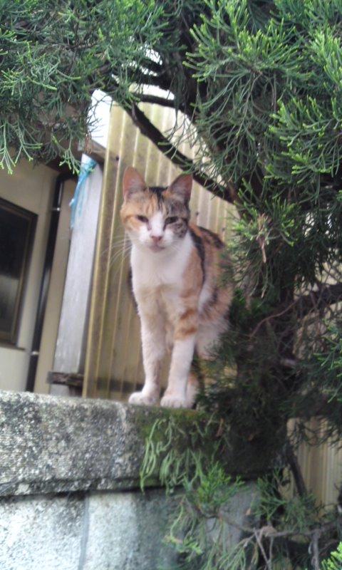 近所猫1.JPG