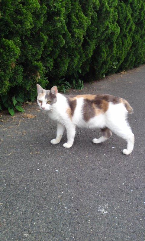 近所猫2.JPG