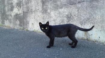 黒2010 (2).JPG