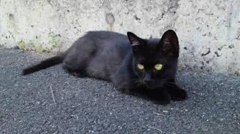 黒2010.JPG